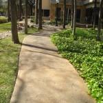 Stamped Concrete at the Arboretum Austin TX